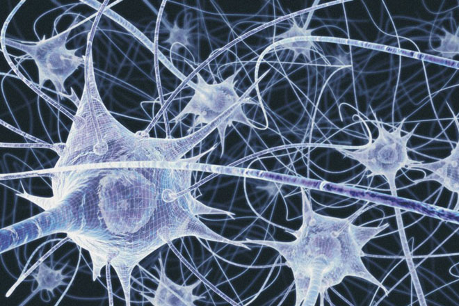 Neurons in the brain - illustration